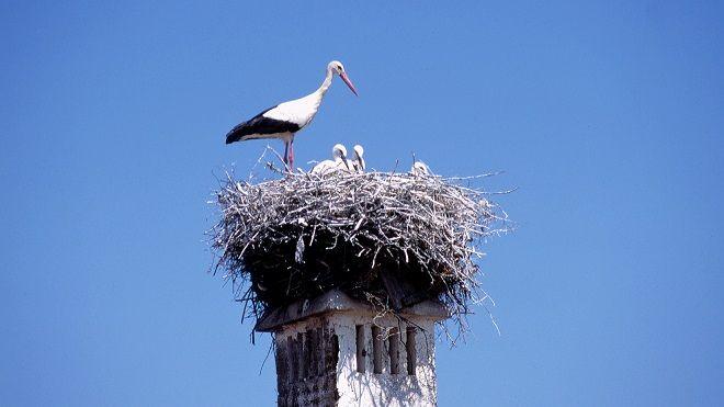 Birdwatching_cegonha Local: Avis
