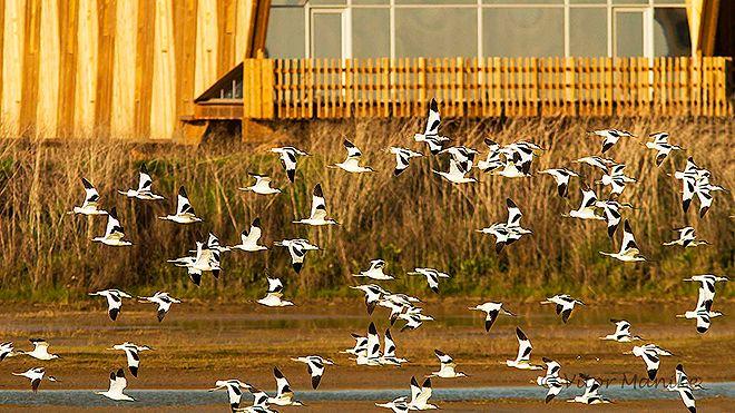 EVOA - Espaço de Visitação e Observação de Aves Luogo: Vila Franca de Xira Photo: EVOA