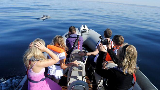 Formosamar_Dolphin watching Foto: Formosamar