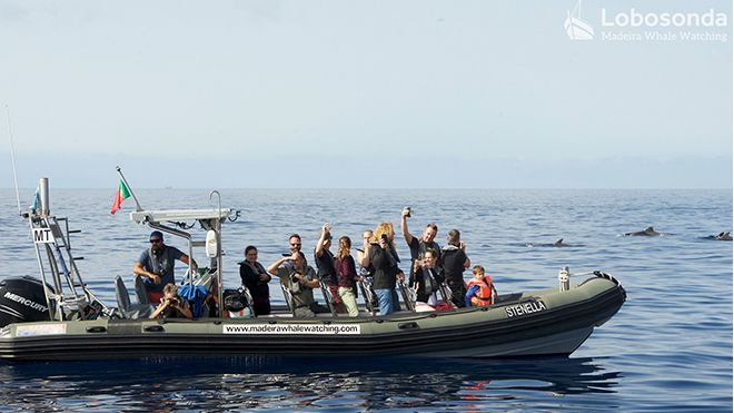 Lobosonda - Madeira whale watching Local: Calheta Foto: Lobosonda - Madeira whale watching