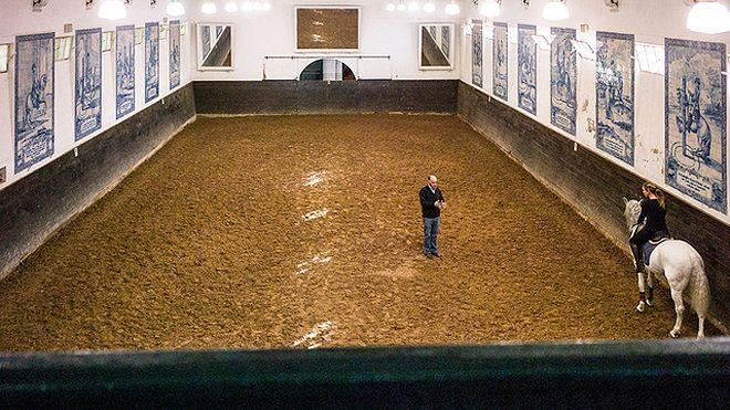 Lusitanos d'Atela - Coudelaria Bessa de Carvalho&#10場所: Alpiarça&#10写真: Lusitanos d'Atela - Coudelaria Bessa de Carvalho