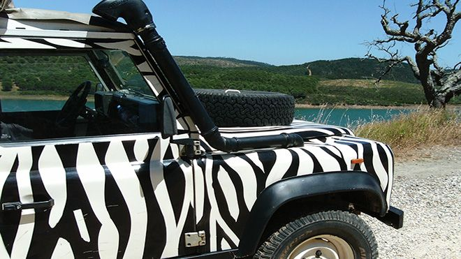 Arbez Zebra Ort: Cascais Foto: Arbez Zebra
