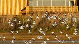 EVOA - Espaço de Visitação e Observação de Aves&#10Ort: Vila Franca de Xira&#10Foto: EVOA
