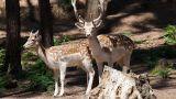 Parque Biológico Serra da Lousã Luogo: Miranda do Corvo