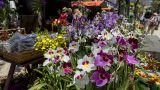 Festa da Flor Place: Funchal Photo: AP Madeira