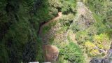 Floresta Laurissilva Local: Rabaçal Foto: Turismo da Madeira