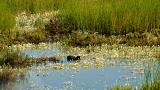 Duck&#10Place: Ria Formosa&#10Photo: Turismo do Algarve