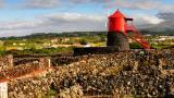 Pico 地方: Ilha Do Pico nos Açores 照片: DRT, Maurício de Abreu