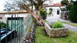 Photo: Casa da Avó Ana