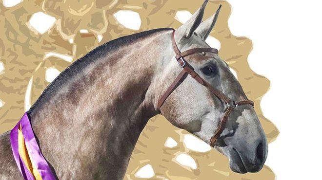 Lima Fair 2020.Ponte De Lima Horse Fair Www Visitportugal Com