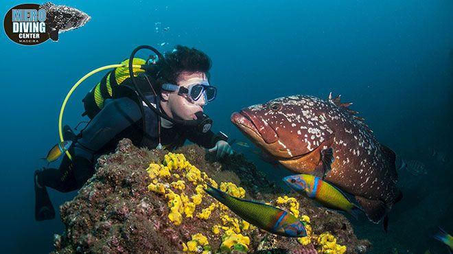 Mero Diving Center&#10Local: Madeira&#10Foto: Mero Diving Center