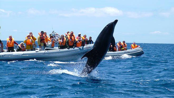 Risultati immagini per whale watching azores