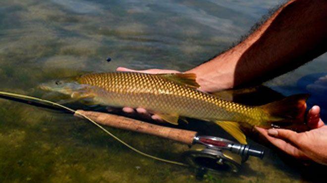 Naturpesca - Guias de Pesca Desportiva