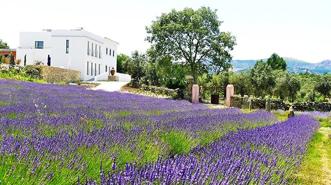 Quinta das Lavandas&#10Место: Castelo de Vide&#10Фотография: Quinta das Lavandas