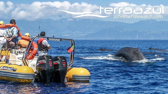 Azores Whale Watching TERRA AZUL Photo: Azores Whale Watching TERRA AZUL