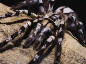 A journey to the world of spiders