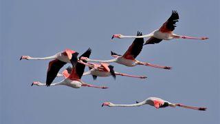 Aves do Algarve Place: Algarve Photo: Joao Lara