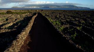 Vinha da Ilha do Pico 地方: Ilha Do Pico nos Açores 照片: António Sá