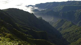Floresta Lauríssilva Ort: Madeira Foto: Turismo de Portugal