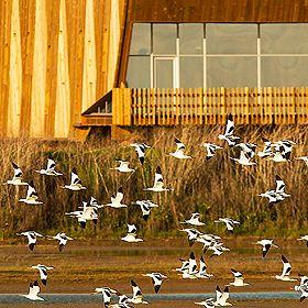 EVOA - Espaço de Visitação e Observação de AvesFoto: EVOA