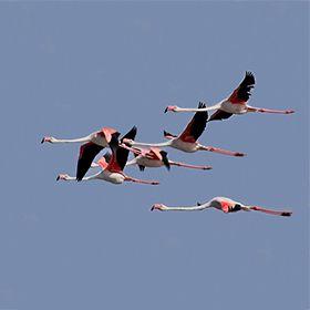 Aves do AlgarveLocal: AlgarveFoto: Joao Lara