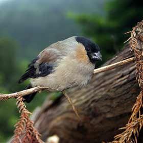 Priolo - Ilha de São MiguelLocal: AçoresFoto: Turismo dos Açores / Veraçor
