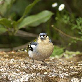 Espécies raras na MadeiraLocal: Floresta LaurisilvaFoto: Patrimonio Mundial