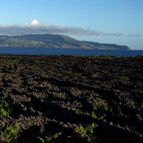 PicoLocal: Ilha Do Pico nos AçoresFoto: António Sá
