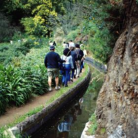 LevadaLocal: MadeiraFoto: Turismo da Madeira