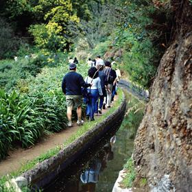 LevadaPlace: MadeiraPhoto: Turismo da Madeira