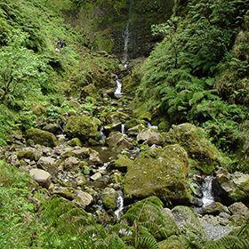 Parque Natural da MadeiraLocal: MadeiraFoto: AP Madeira