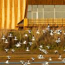 EVOA - Espaço de Visitação e Observação de Aves Foto: EVOA