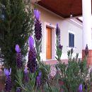 Espargosa Place: Castro Marim Photo: Espargosa