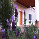 Espargosa Place: Castro Marim Photo: Espargosa