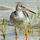 Birdwatching 写真: Carvalho Pereira