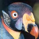 Parque Ornitológico de Lourosa