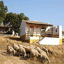 Aldeamento Turístico  Quinta dos Amarelos