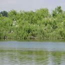 Reserva Natural do Paul do Boquilobo