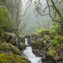 Queimadas Место: Calheta/Madeira Фотография: Gtresonline
