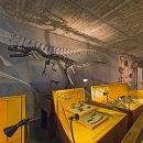 Museu Nacional de História Natural e da Ciência Место: Lisboa