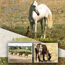 Quinta da Boa Vista&#10Lugar Vila Franca de Xira&#10Foto: Quinta da Boa Vista