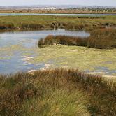 Reserva Natural do Sapal de Castro Marim e Vila Real de Santo António