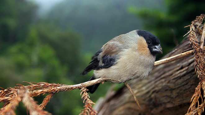 Ilha de São Miguel - Priolo&#10Lugar Açores&#10Foto: Turismo dos Açores / Veraçor