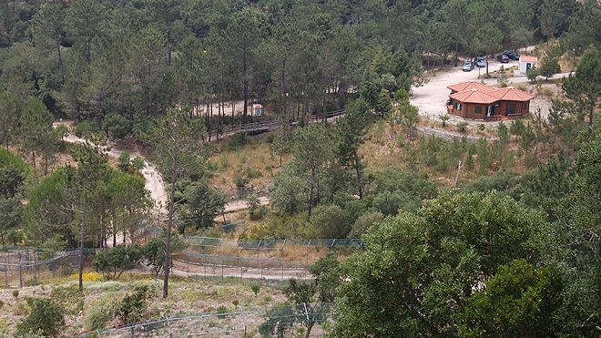 Centro Recuperação Lobo Ibérico&#10Lieu: Gradil - Mafra&#10Photo: Grupo Lobo