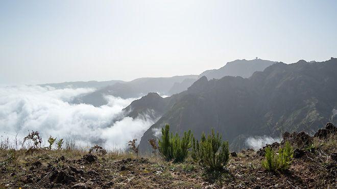 Madeira Destination Services&#10Local: Funchal&#10Foto: Madeira Destination Services