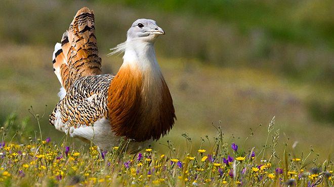 Birdwatching Portugal&#10Foto: João Edgar