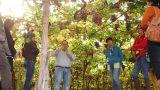 Find Ferreira do Alentejo with us&#10Local: Ferreira do Alentejo&#10Foto: Find Ferreira do Alentejo with us