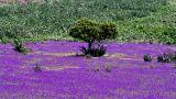 Algarve Selvagem&#10Local: Alvor / Portimão&#10Foto: Algarve Selvagem