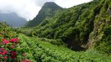 Vineyard&#10Lieu: Calheta&#10Photo: Turismo da Madeira