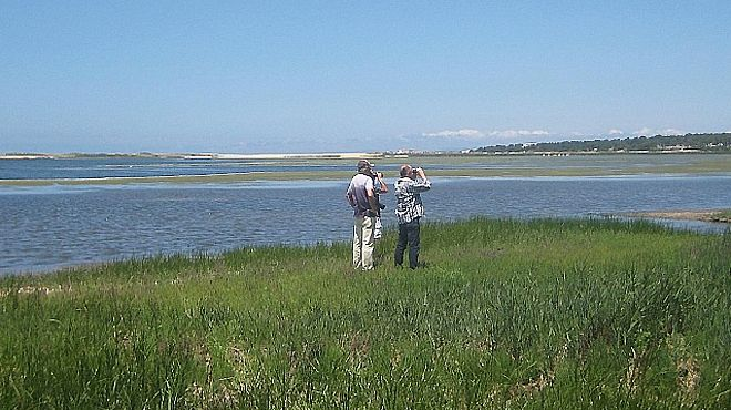 Birdwatching Alentejo&#10Local: Santiago do Cacém&#10Foto: Birdwatching Alentejo